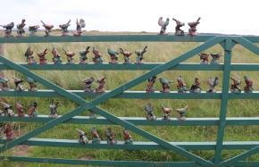 IMG_7726 iron birds